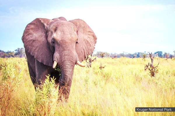 AFRICA: 11 Day South Africa Wildlife Tour Including Flights for Two