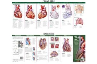 Anatomical Chart Company's Illustrated Pocket Anatomy - Anatomy of The Heart Study Guide