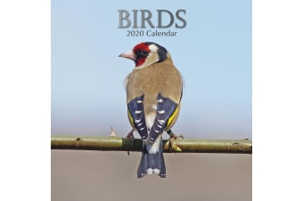 Birds - 2020 Premium Square Pets Wall Calendar 16 Months New Year Decor Gift