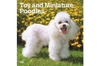 Poodles, Toy and Miniature 2019 Wall Calendar