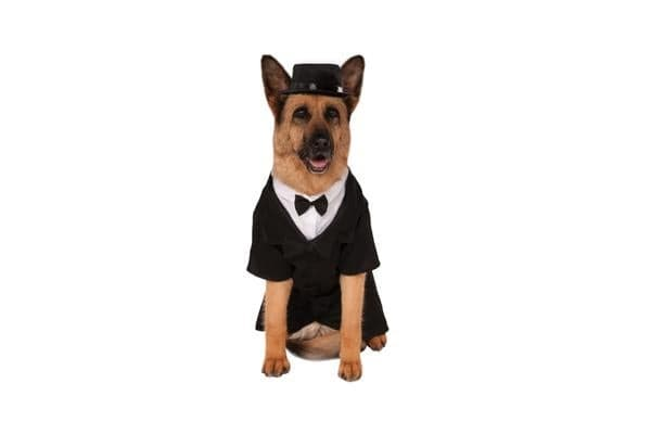 Dapper Dog Tuxedo Big Dog Pet Costume - XXL