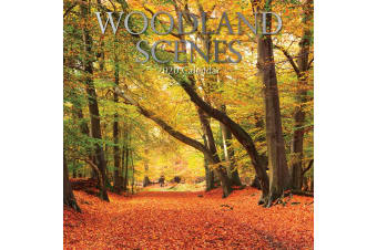 Woodland Scenes - 2020 Premium Square Wall Calendar 16 Months New Year Xmas Gift