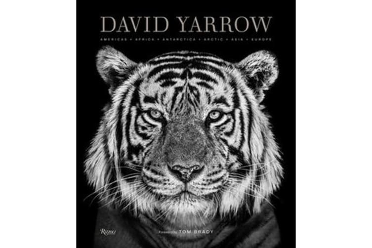 David Yarrow Photography - Americas Africa Antarctica Arctic Asia Europe