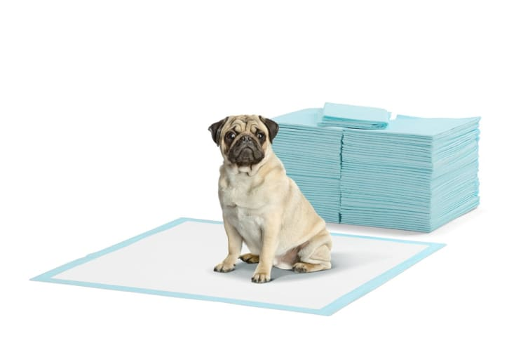 Pawever Pets 200 Pack Puppy Training Pads (Blue)