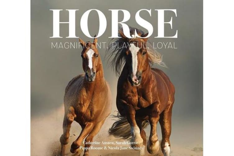 Horse - Magnificent, Playful, Loyal
