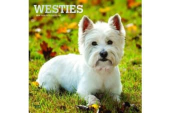 West Highland White Terriers 2019 Square Wall Calendar