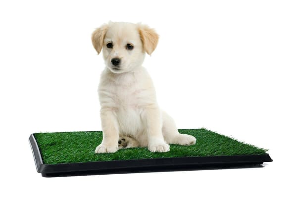 Puppy Training Grass Mat