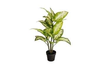 Holly Collection | Potted Dumb Canes Plant | 93cm