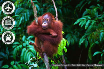 BORNEO: 9 Day Borneo Wildlife Tour Including Flights for Two