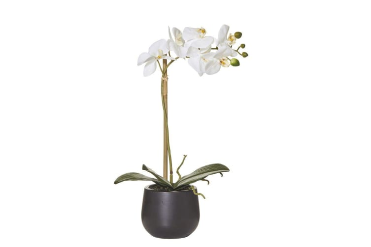 Rogue Butterfly Orchid Smooth Pot 44cm White