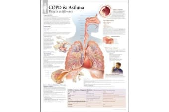 Respiratory System Laminated Poster