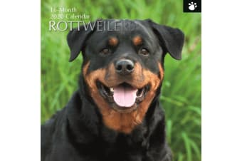 Rottweilers - 2020 Wall Calendar 16 month Premium Square 30x30cm (X)