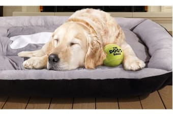 Heavy Duty Pet Bed Mattress - Medium