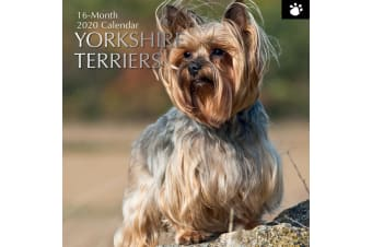 Yorkshire Terriers 2020 Premium Square Pets Dogs Wall Calendar 16 Month New Year
