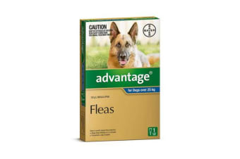Advantage Dog Extra Large Blue - 4p