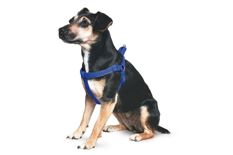 Ancol Pet Products Padded Dog Exercise Harness (Blue) (Small)