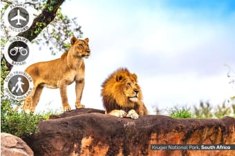 AFRICA: 11 Day South Africa Wildlife Tour Including Flights