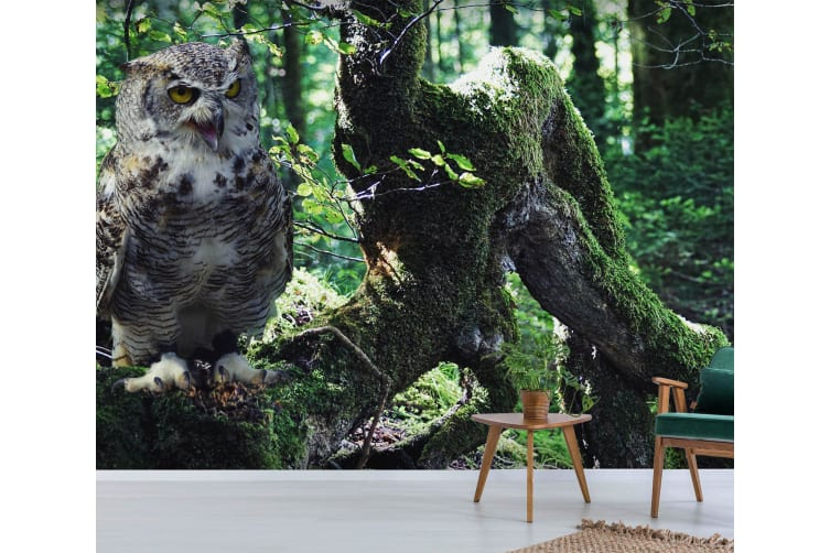 3D Forest Owl 217 Woven paper (need glue), XXL 312cm x 219cm (WxH)(123''x87'')