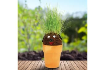 Pot Head Magic Hair Plant Grass Growing Seeds Educational Kids Learn Gardening Fun