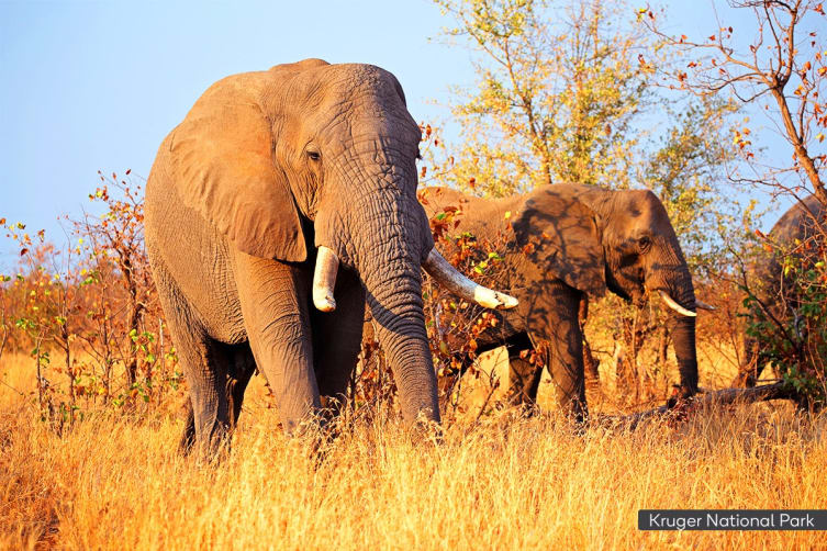 AFRICA: 20 Day Amazing Africa Tour Including Flights for Two
