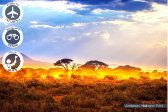 KENYA: 11 Day Great Migration Kenya Safari Tour Including Flights for Two