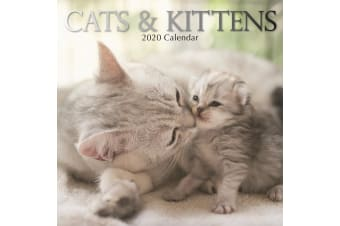 Cats & Kittens - 2020 Wall Calendar 16 month Premium Square 30x30cm (U)