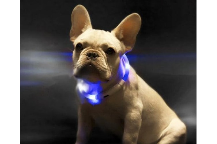 LED Dog Collar, USB Rechargeable, Glowing Pet Dog Collar for Night Safety, Fashion Light up Collar for Small Medium Large dogs70CM-RED