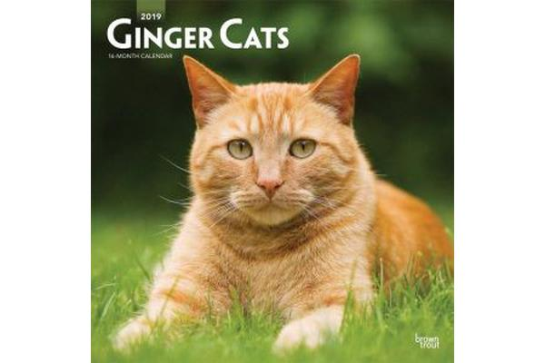 Ginger Cats 2019 Square Wall Calendar