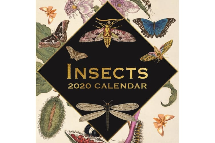 Insects - 2020 Wall Calendar 16 month Premium Square 30x30cm (O)