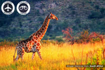 AFRICA: 12 Day Highlights Tour Including Flights for Two
