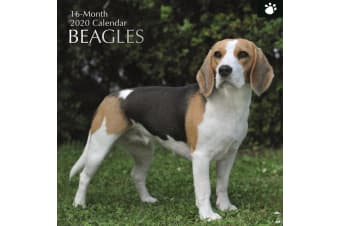 Beagles - 2020 Wall Calendar 16 month Premium Square 30x30cm (D)