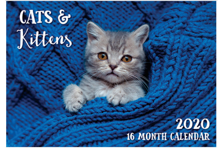 Calendrier Om 2020 16.Cats Kittens 2020 Rectangle Wall Calendar 16 Months By Biscay A