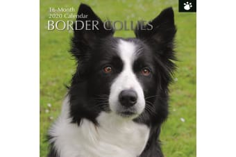 Border Collies - 2020 Wall Calendar 16 month Premium Square 30x30cm (I)