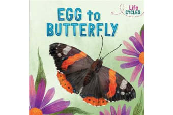 Life Cycles - Egg to Butterfly