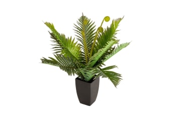 Holly Collection | Potted Boston Plant | 60cm