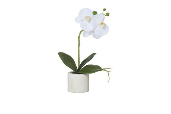 Rogue Artificial Butterfly Orchid w/ Stone Pot