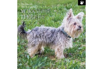 Yorkshire Terriers 2018 Premium Square Wall Calendar 16 Month New Year Xmas Gift