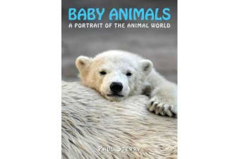 Baby Animals - A Portrait of the Animal World
