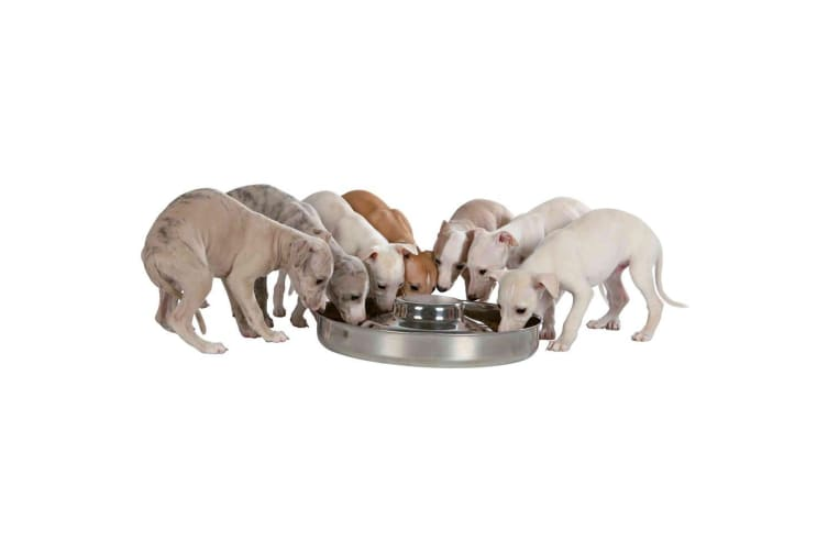 Trixie Stainless Steel Puppy Bowl (Silver) (4 L)