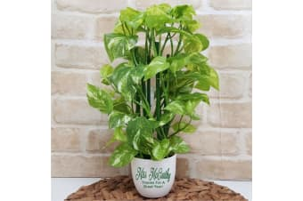 Real Touch Pothos Plant in Personalised Teacher Pot