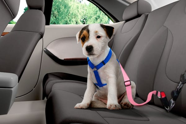 Pawever Pets Seat Belt (Light Pink)
