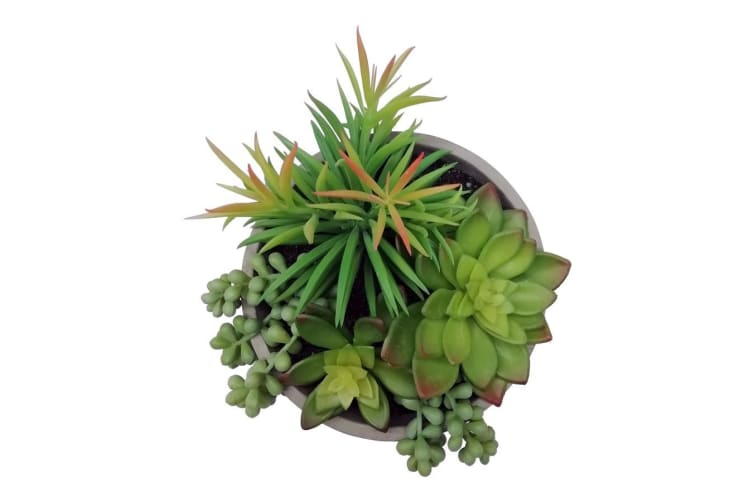 Holly Collection | Mixed Artificial Succulents With Stand