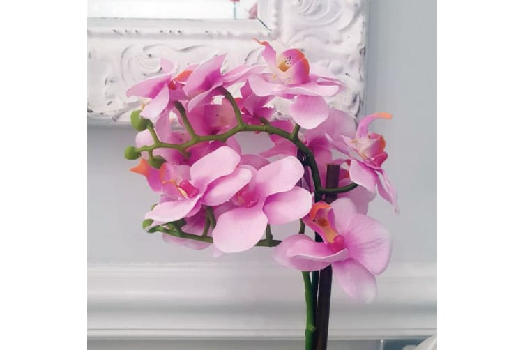 Graduation Pink Singapore Orchid in Personalised Pot