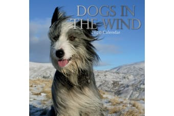 Dogs in the Wind  2020 Premium Square Pets Wall Calendar 16 Months New Year Xmas