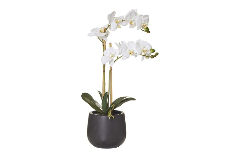Rogue Butterfly Orchid Smooth Pot 56cm White