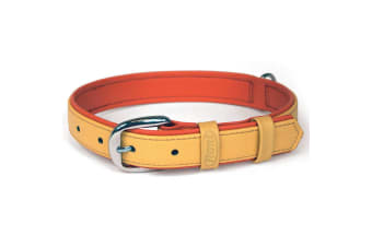 Bogdahn International Flexi Summertime 3 Pet Collar (Orange)