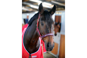 Whitaker Padded Fleece Headcollar (Red)