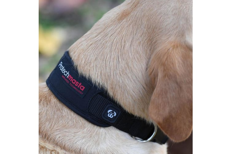 Masta Protechmasta Dog Collar And Sleeve (Black) (Small)