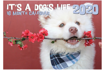 It's A Dog's Life - 2020 Rectangle Wall Calendar 16 Months by Artwrap (B)