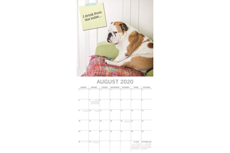 Dog Shaming - 2020 Wall Calendar 16 month Premium Square 30x30cm (F)